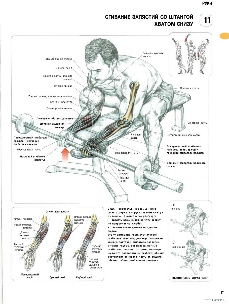 Тренировка со штангой в домашних условиях