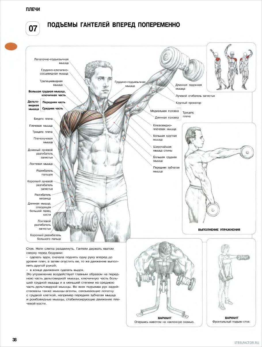 Упражнения для мышц в картинках с описанием