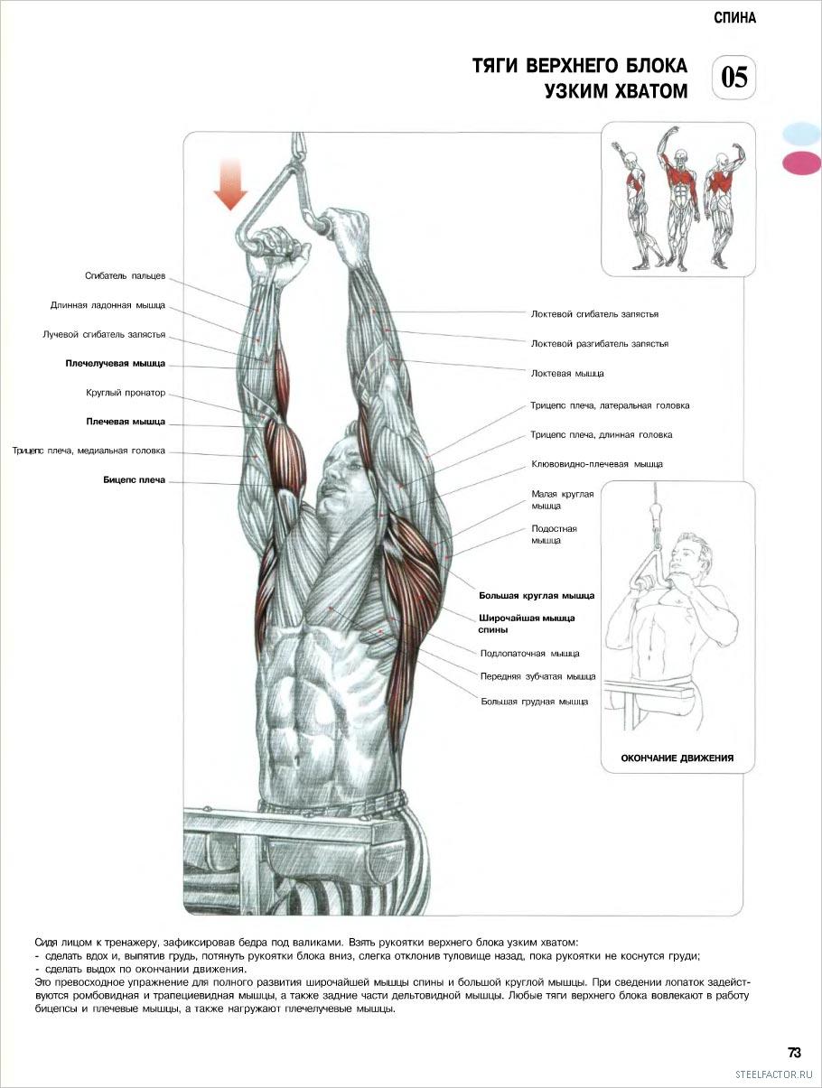 Тело, как у пловца лучшие упражнения для V-образной фигуры 17