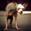 Уголок падонковского анекдота! - последний пост от  puffi88